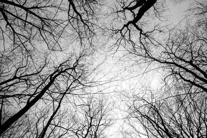 alte und junge Bäume im Wald