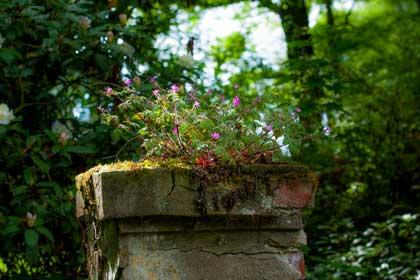 Wilde Blumen auf einer Steinsäule