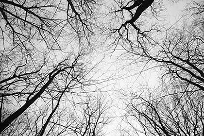 Foto von Baumkronen im Winter